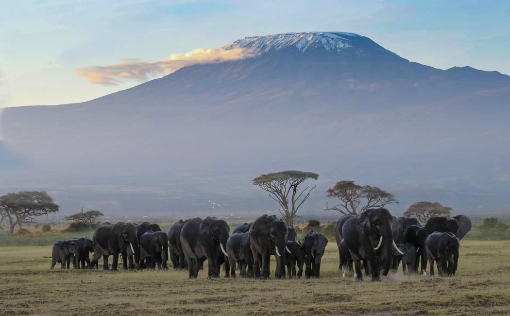 Safari en Amboseli