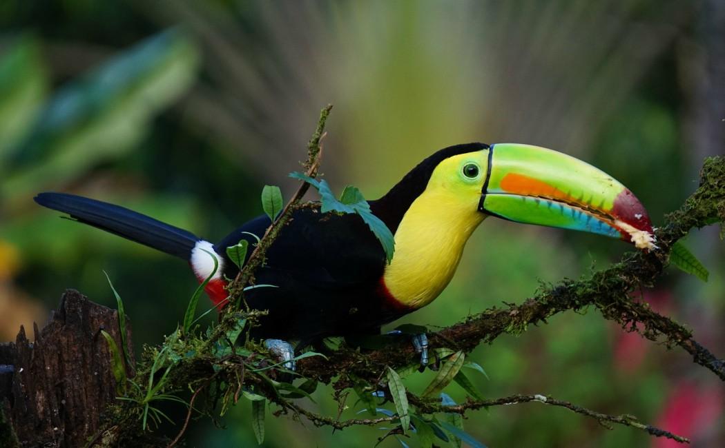 Tucán de Costa Rica. Viajar en familia: los 10 mejores destinos del planeta