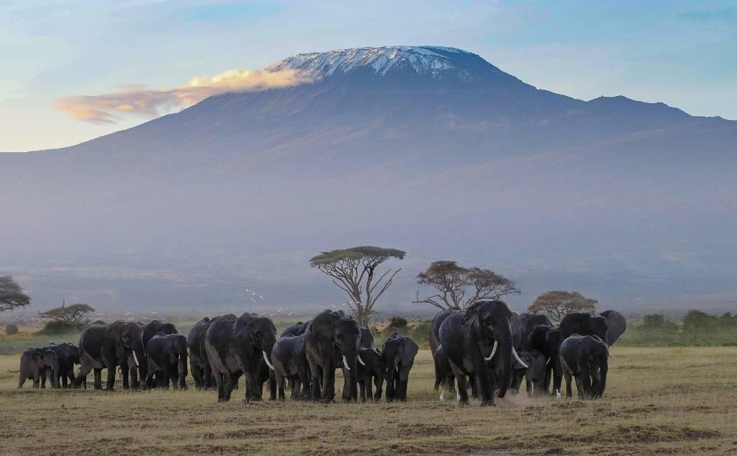 Ambosely y Kilimanjaro
