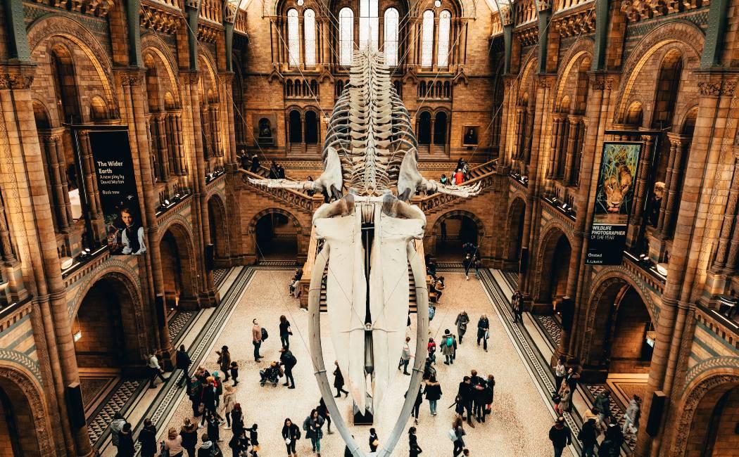 Museo de Historia Natural. Que ver londres