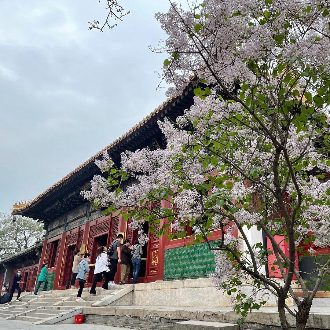 Templo Yonghe en primavera