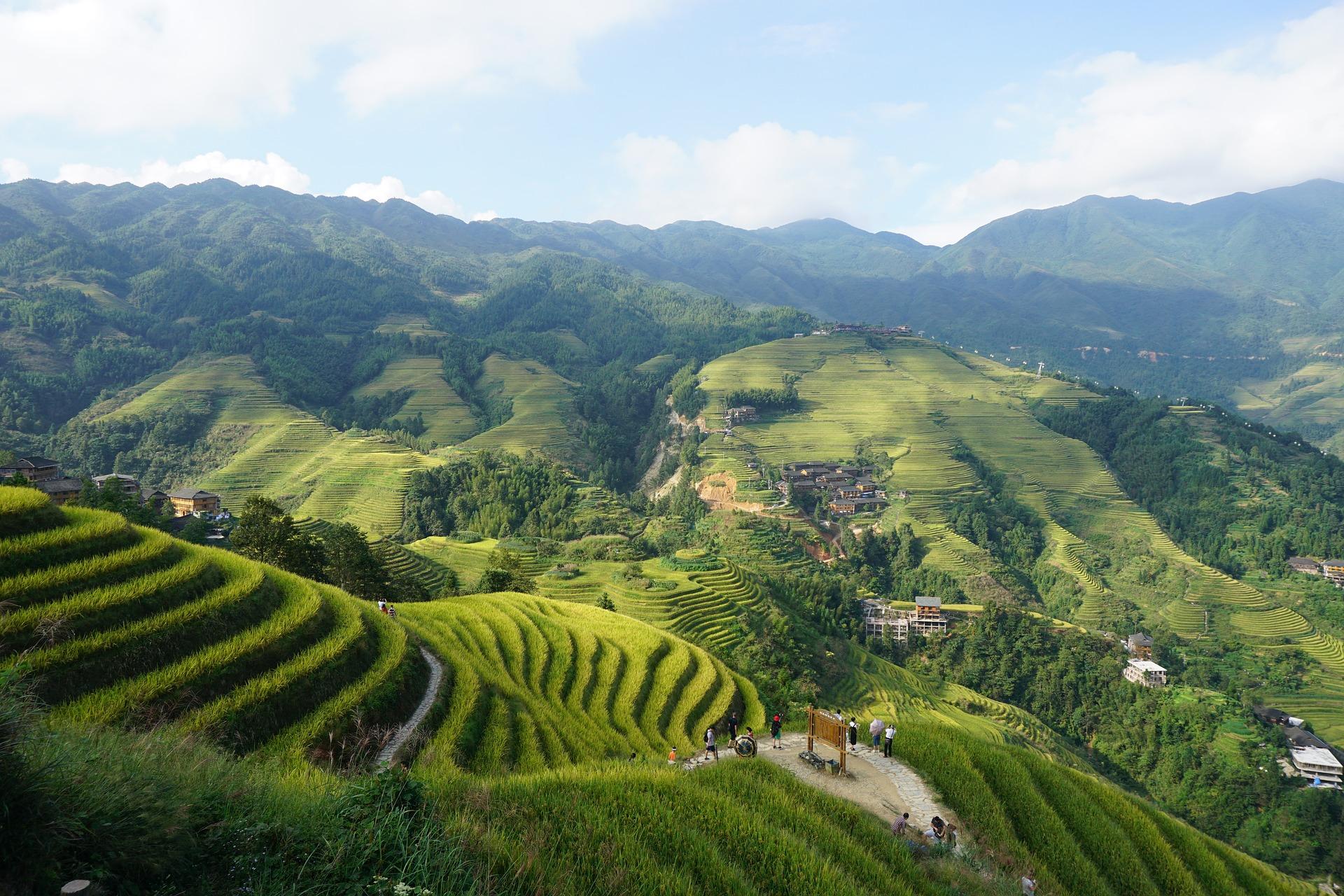 Plantación arroz Longji