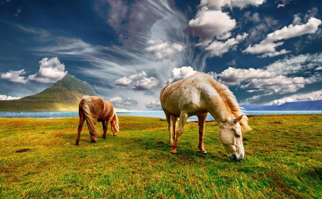 caballos de viaje a islandia